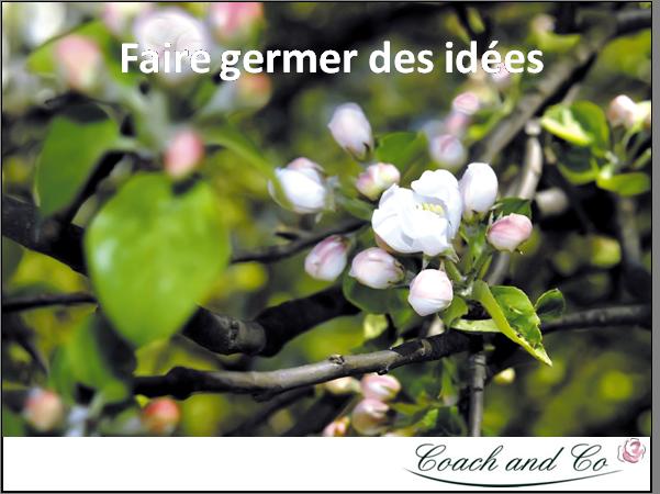Faire germer des id es coach and co - Faire germer des graines de potimarron ...